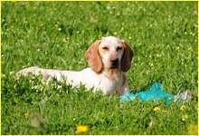 private dog care