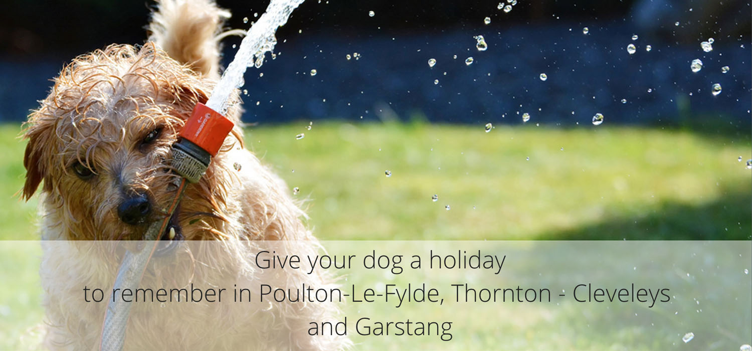 Holidays for Dogs Lancashire
